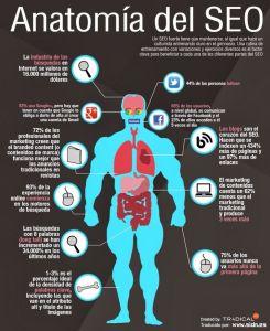 Infografía anatomía del SEO